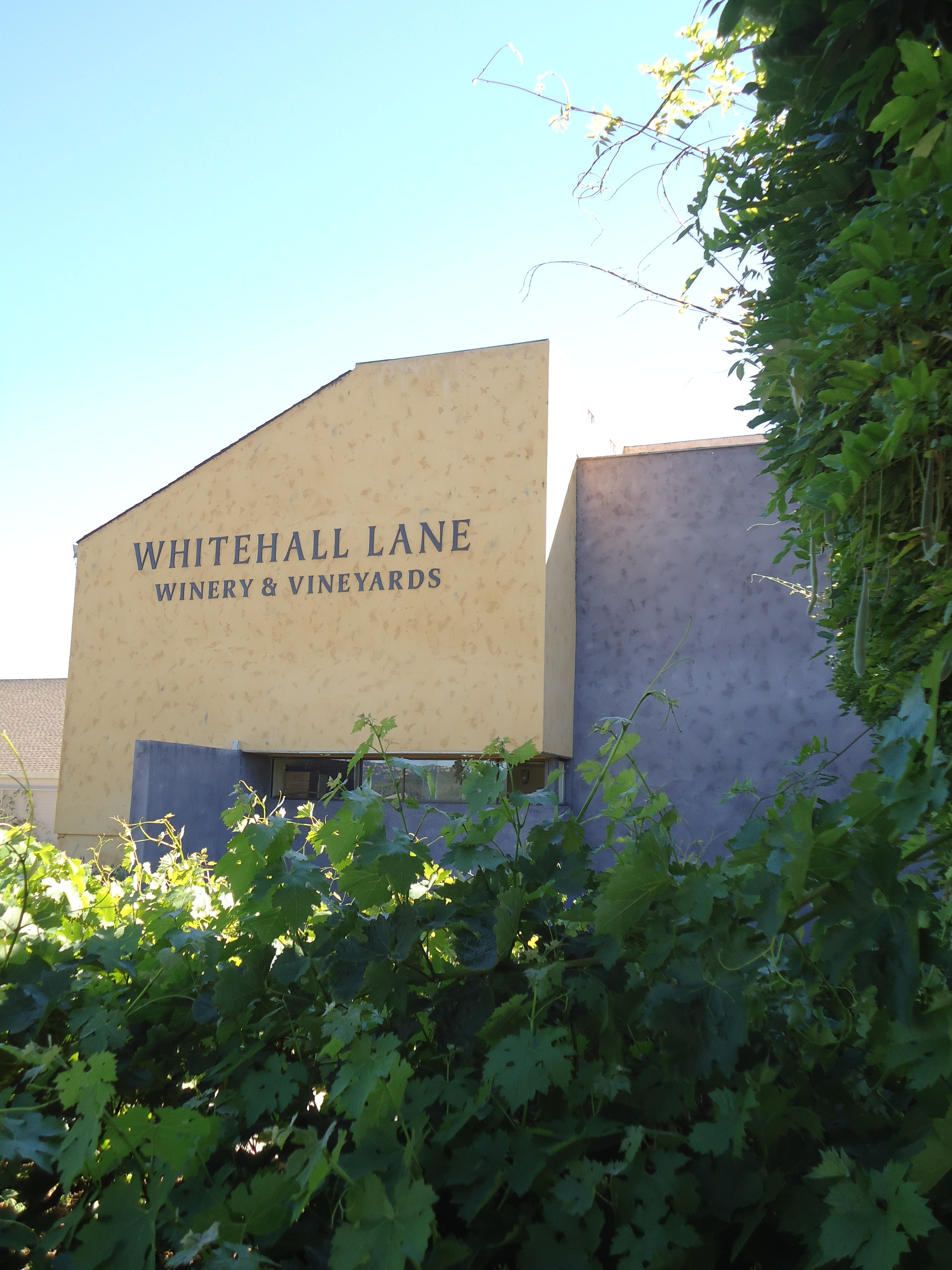 Whitehall Lane, Napa Valley